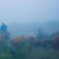 Foggy Morning Gather by Kelli Brown