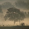 Foggy Morning by Shannon Story