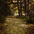 Follow The Light by Ellen Heaverlo