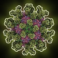 Foot-and-mouth Disease Virus by Science Photo Library