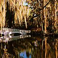 Footbridge Over Swamp, Magnolia by Panoramic Images