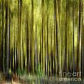 Forest by Bernard Jaubert