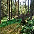 Forest by Jouko Lehto