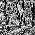 Forest View by David Pyatt