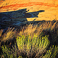 Fossil Beds And Grass by Inge Johnsson