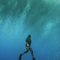 Freediving by Scubazoo/science Photo Library