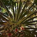 Fresh Cut Palm 2 by Alan Metzger