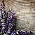 Fresh Lavender by Mythja  Photography