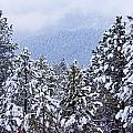 Fresh Snow by Steve Krull