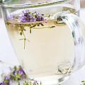 Fresh Thyme Tea by Elena Elisseeva