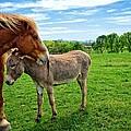 Friends On The Farm by Lynn Bauer