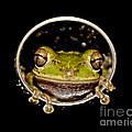 Frog by Olga Hamilton