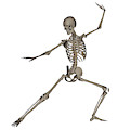 Front View Of Human Skeleton by Elena Duvernay