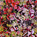 Frost On Autumn Tundra by John Shaw