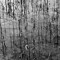 Frozen Lake by Dan Radi