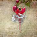 Fuchsia  by Garvin Hunter