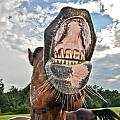 Funny Horse by Alex Grichenko