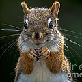Furry Friend by Cheryl Baxter