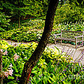 Garden Bench by Joe Mamer