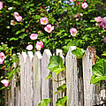 Garden Fence With Roses by Elena Elisseeva