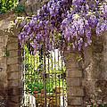 Garden Gate by Ellen Henneke