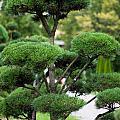 Garden Landscape - Topiary by Frank Gaertner