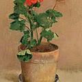 Geraniums In A Pot by Odilon Redon