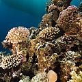 Giant Clam And Tropical Reef In The Red Sea. by Stephan Kerkhofs