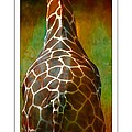 Giraffe Colors by Alice Gipson