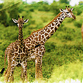 Mom Giraffe And Little Joey by Don Kuing