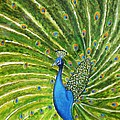 Glorious Peacock by Manjiri Kanvinde