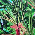 Going Bananas by Deborah Boyd