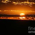 Golden Morning by Susan Herber