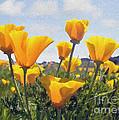 Golden Poppies Impasto by Sharon Foster