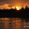 Golden Sunset by Jan Noblitt
