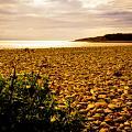 Golden Sunset by Mark Llewellyn