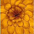 Golden Sunshine - Dahlia by Dora Sofia Caputo Photographic Design and Fine Art