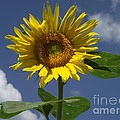 Good Morning Sunshine by Michelle Welles