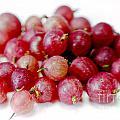 Gooseberries by Iris Richardson