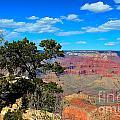 Grand Canyon - South Rim by Barbara Zahno