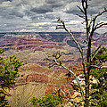 Grand Canyon View From The South Rim by Randall Nyhof