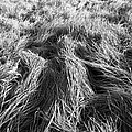 Grass In Black And White by Roman Aj