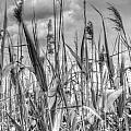 Grasses In Motion by Stephen Barrie