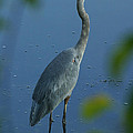 Great Blue Heron I by Butch Lombardi