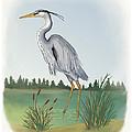 Great Blue Heron by Janet Valentine