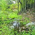 Green Forest by Guido Montanes Castillo