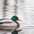 Green-headed Duck by Jivko Nakev