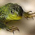 Green Lizard by Cliff Norton