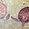 Green Turtles by Carey Chen