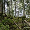 Green Untouched Forest by Kennerth and Birgitta Kullman